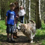 woodovis-park-camping-touring-devon-gallery-the-park-13