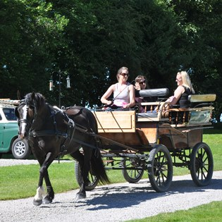 Bonnie the pony giving carriage rides around the park