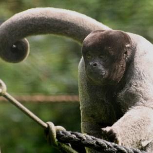 Image of monkey sitting on tree