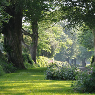 woodovis-park-camping-touring-devon-image-nav-camping-availability