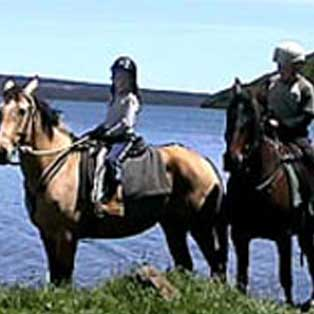 woodovis-park-camping-touring-devon-out-&-about-cholwell-stables
