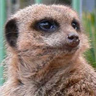 woodovis-park-camping-touring-devon-out-&-about-dartmoor-zoological-park