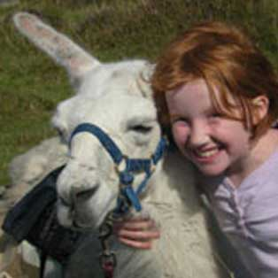 woodovis-park-camping-touring-devon-out-&-about-llama-walks