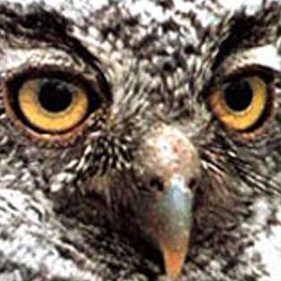 woodovis-park-camping-touring-devon-out-&-about-screech-owl-sanctuary