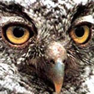 woodovis-park-camping-touring-devon-out-&-about-screech-owl-sanctuary