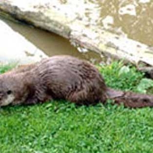 woodovis-park-camping-touring-devon-out-&-about-tamar-otter-wildlife-centre