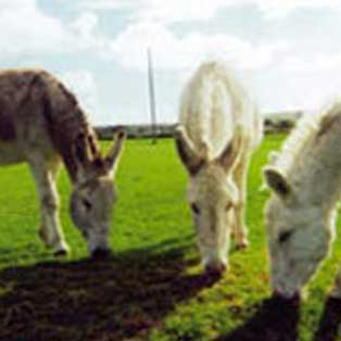 woodovis-park-camping-touring-devon-out-&-about-tamar-valley-donkey-park