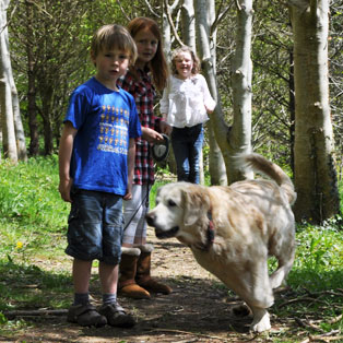 woodovis-park-camping-touring-devon-the-park-facilities-dog-walking