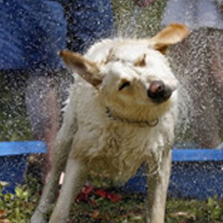 woodovis-park-camping-touring-devon-the-park-facilities-dog-wash